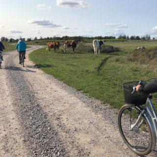 cykla i världsarvet